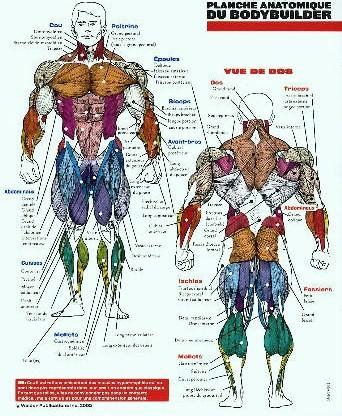 plancheanatomique9xn.jpg